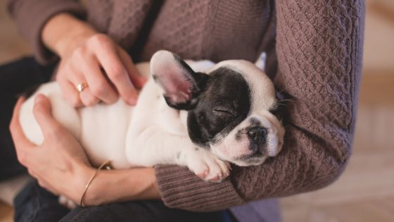 Animal owners take time off work to care for poorly pets