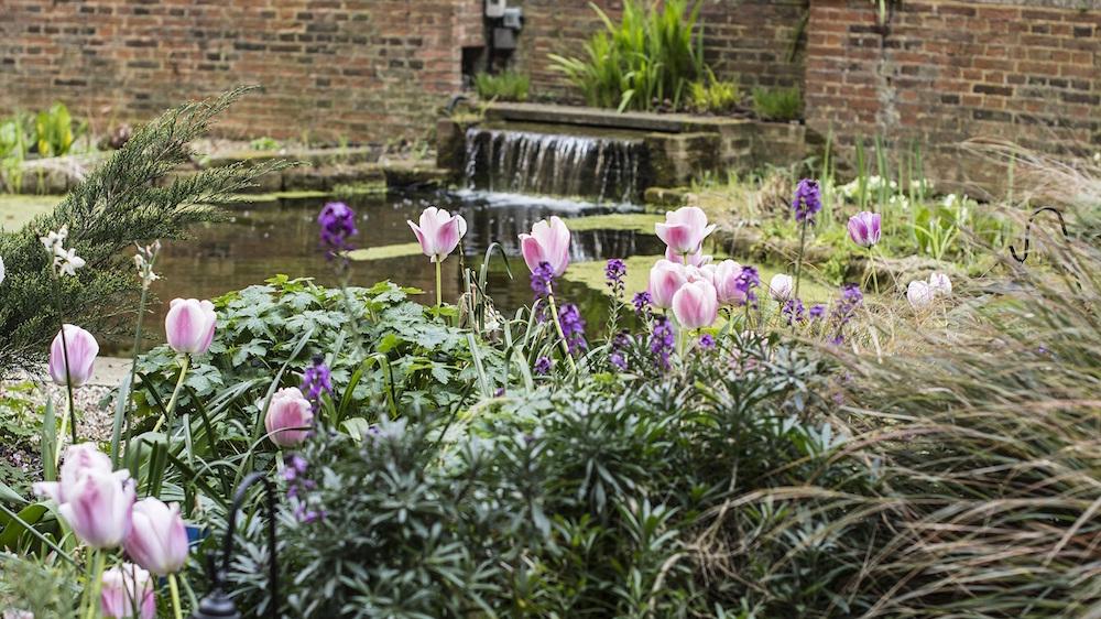The garden at BMA House