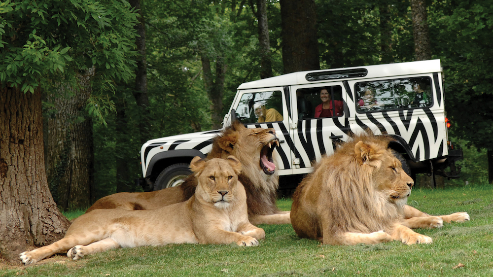 A VIP Safari Tour at Longleat