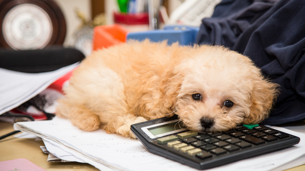 Brits who work from home are distracted by their pets, among other factors