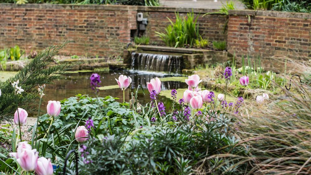 BMA House garden