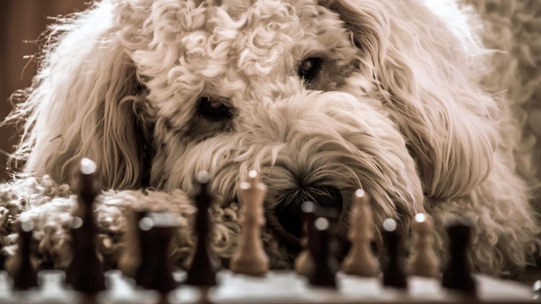 dog-2160149_1920